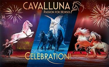 More Info for Cavalluna
